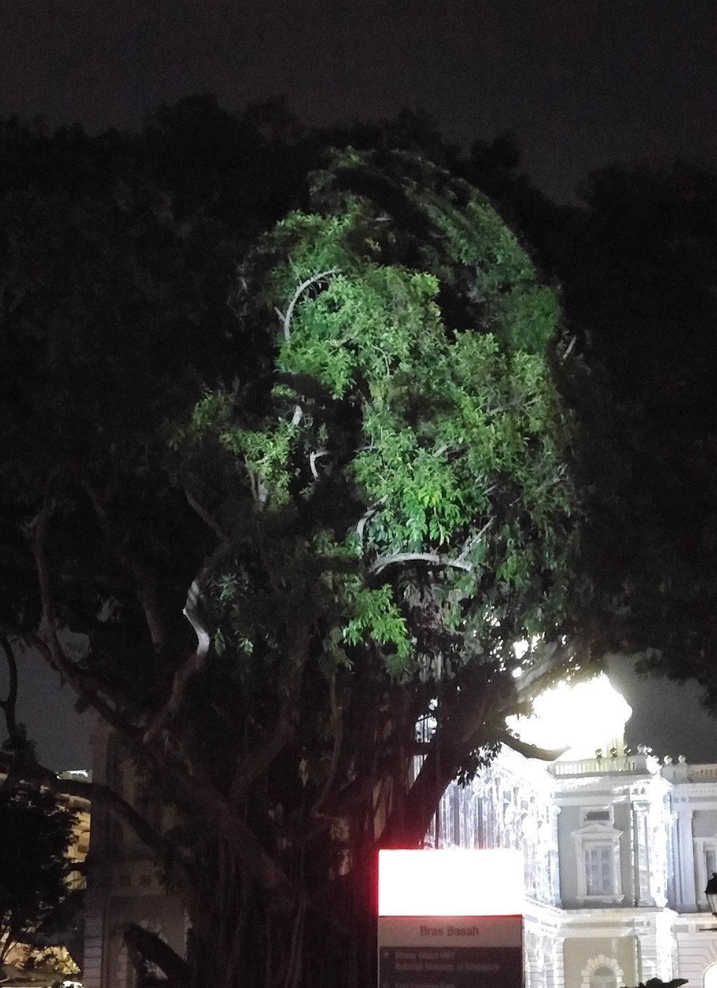 Singapore Night Festival 2017: The Tree that Blinked