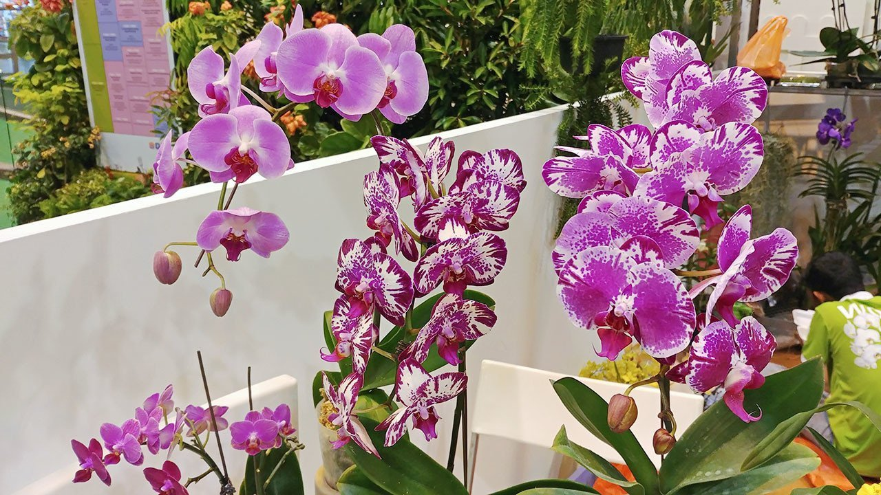 Singaporean Orchids at Ngee Ann City.