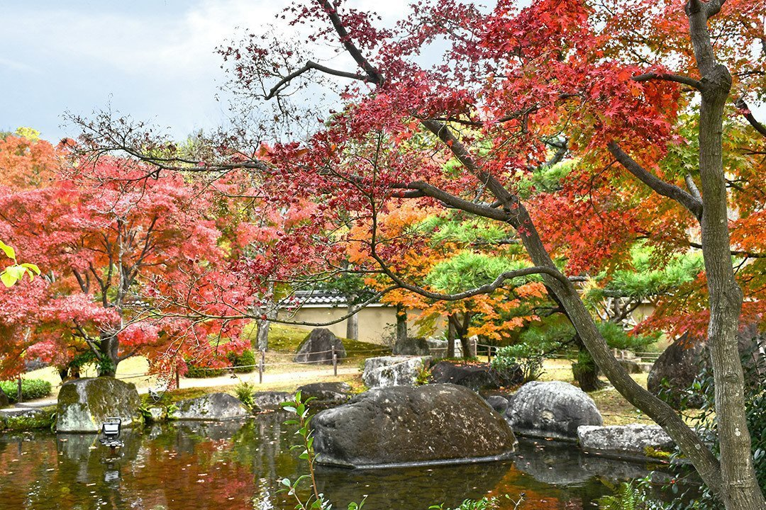Visiting beautiful Koko-en Garden during my Japan autumn trip 2018.