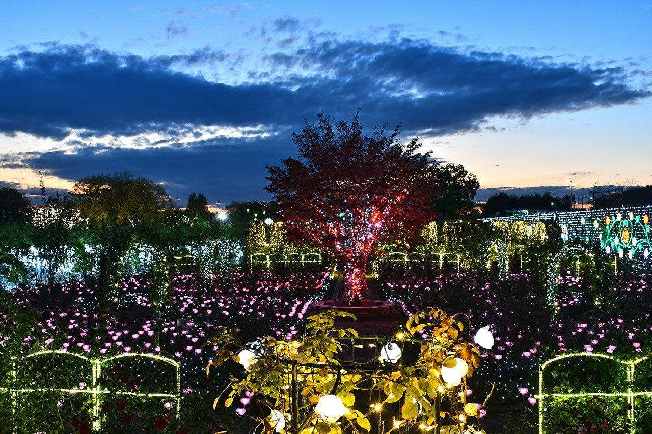 Ashikaga Flower Park Flower Fantasy 2018 at Evening Hour.