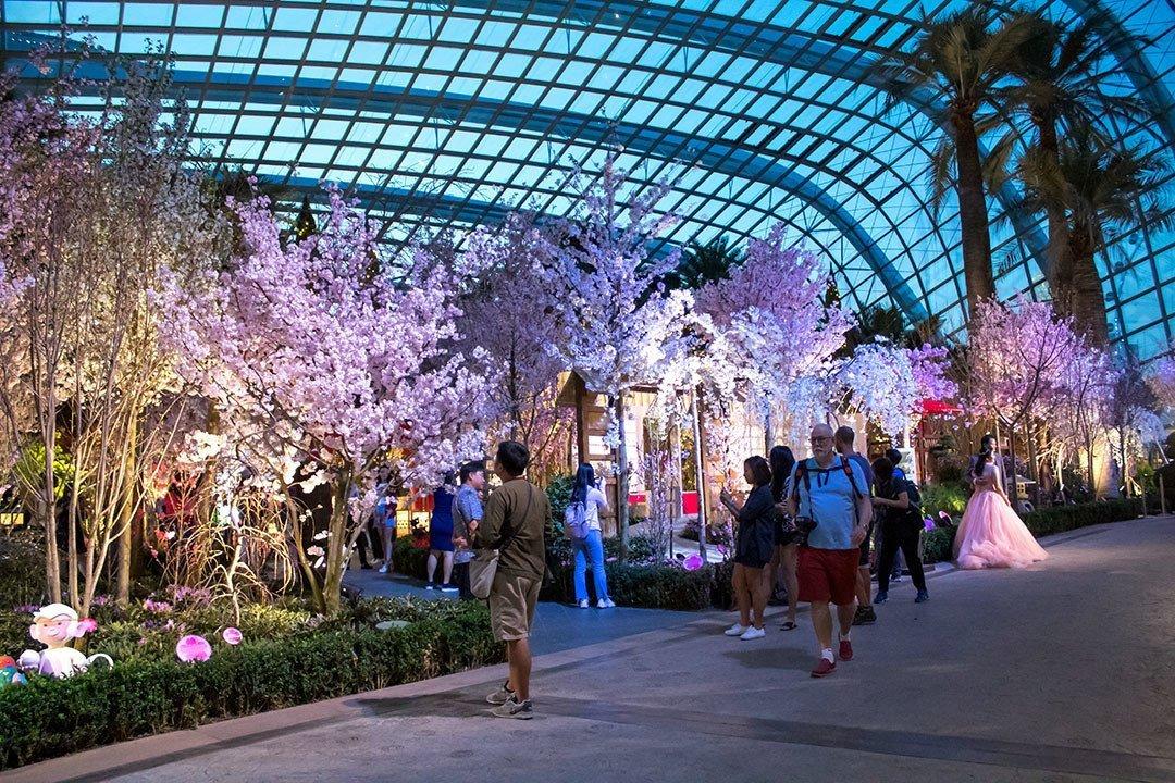 Hanami in Singapore.