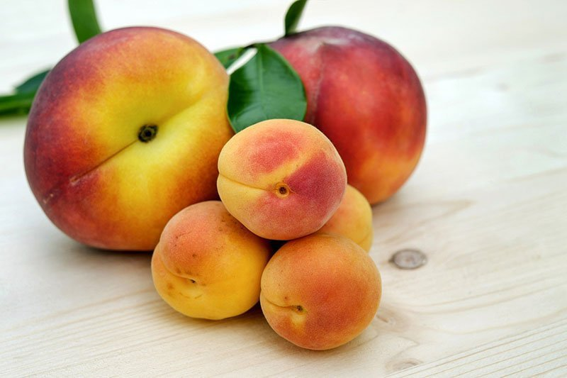 Apricots are delicious and healthy movie snacks.