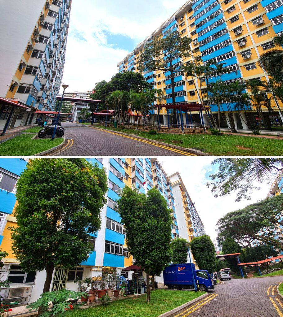 Tiong Bahru Orchid,
